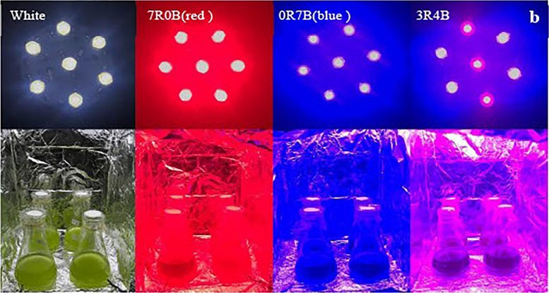 Led Illuminators Installed With Different Combinations of Red and Blue Light