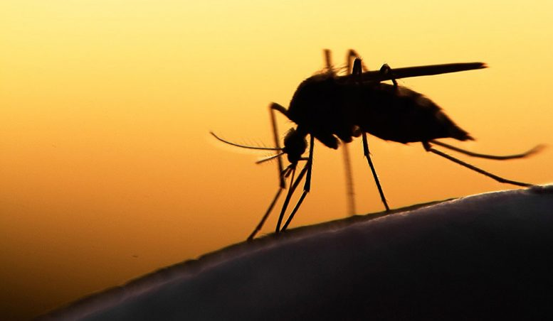 Link Between Glucose Metabolism and Malaria