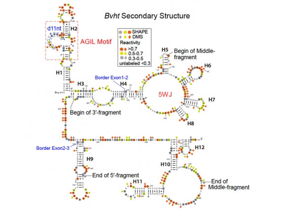 Linking Rna Structure And Function