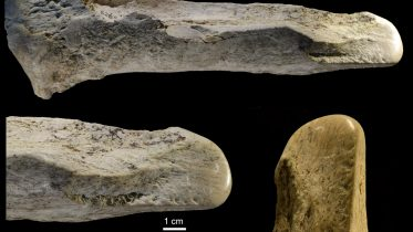 400,000 Years Ago, Ancient Humans Turned Elephant Remains Into a Surprising Array of Bone Tools