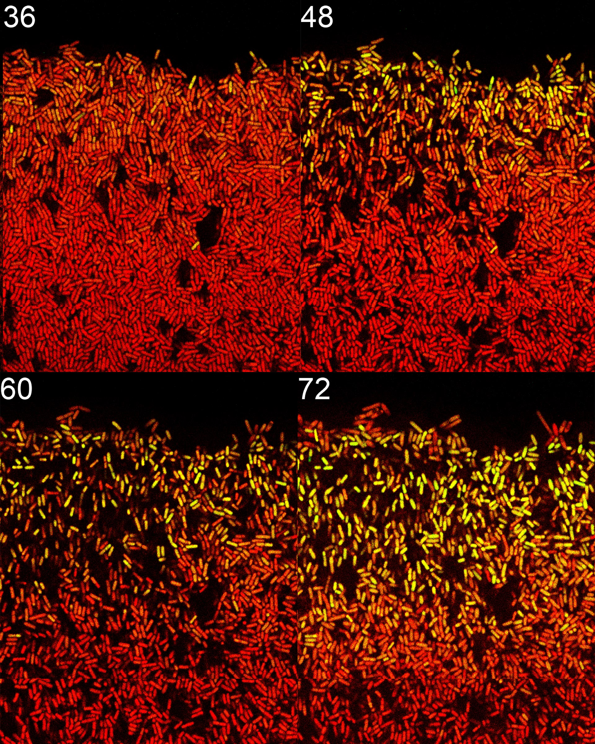 Patterns of Life Generated by Random Gene Pulsing in Cambridge Lab - SciTechDaily