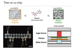 MIT Develops New Microfluidic Device Generates Passive Hydraulic Power