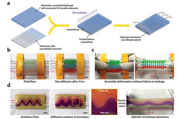 MIT Develops Tough New Hydrogel Hybrid