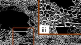 MIT Engineers Design One of the Strongest, Lightest Materials Known