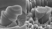 Magnesium Infused with Dense Silicon Carbide Nanoparticles New Creates Lightweight Metal