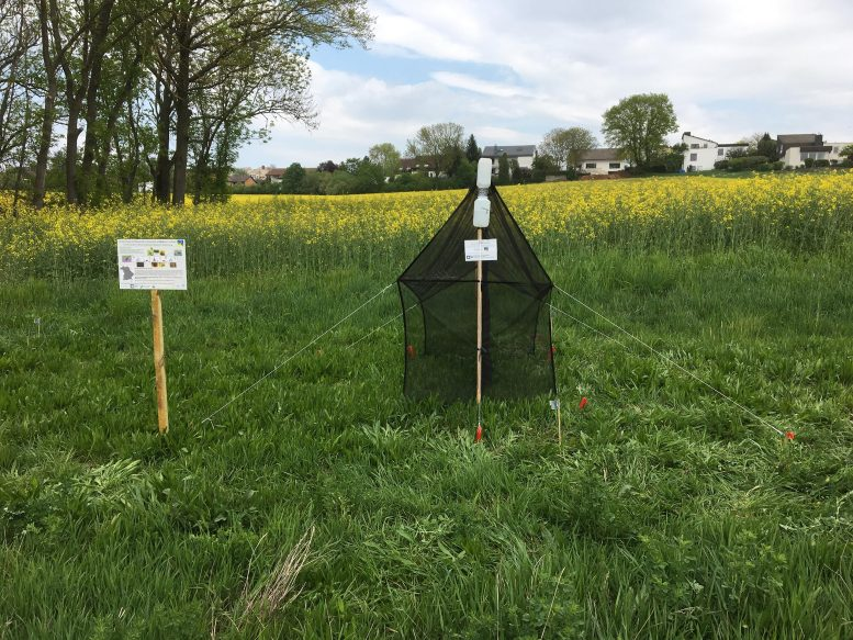 Malaise Trap for Insects