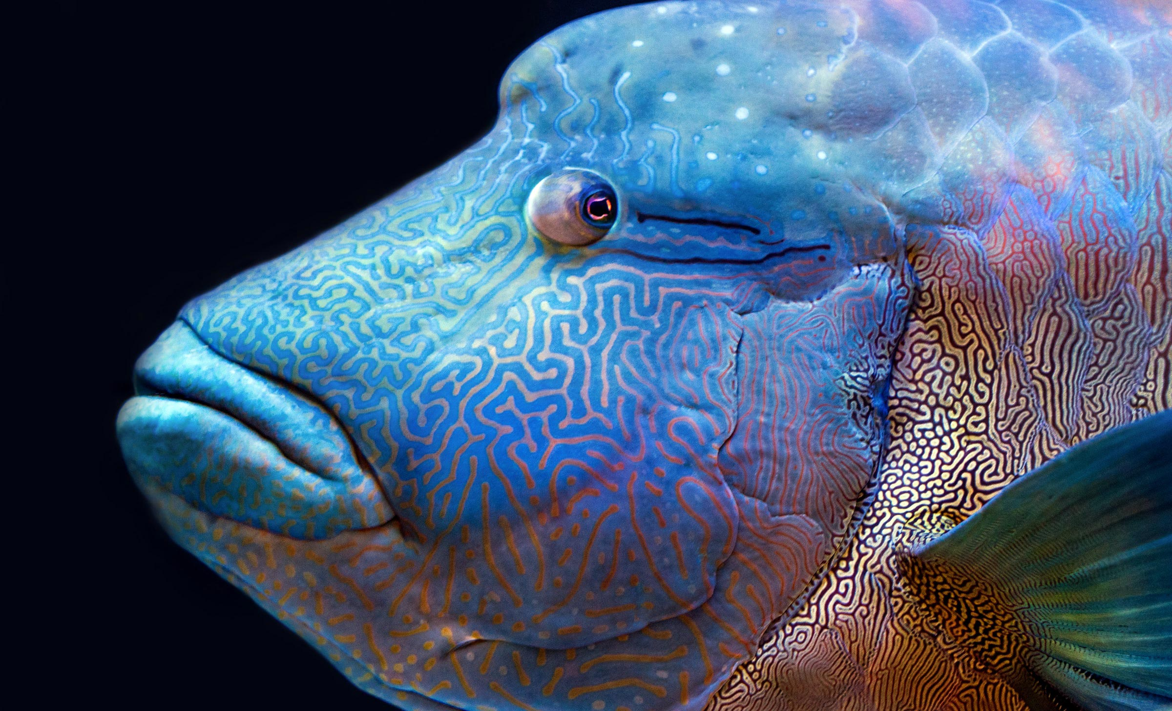 Innovative Genetic Analysis Unlocks Clues to the Evolution and Survival of the Great Barrier Reef