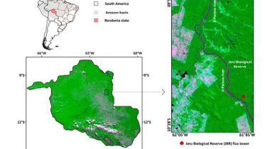 Deeper Insight Into 2019 Fires From Satellite Study of Amazon Rainforest