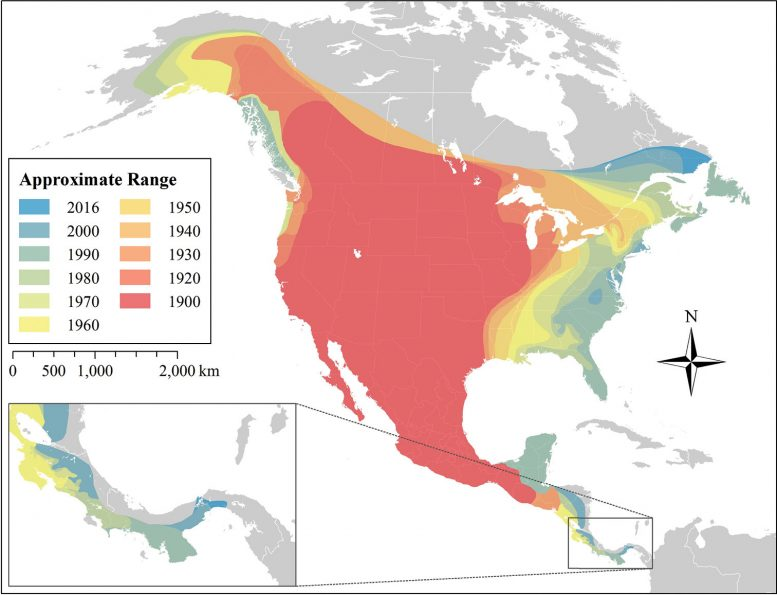Mapping the Expansion of Coyotes