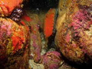 Marine reserves aid ecosystem recovery