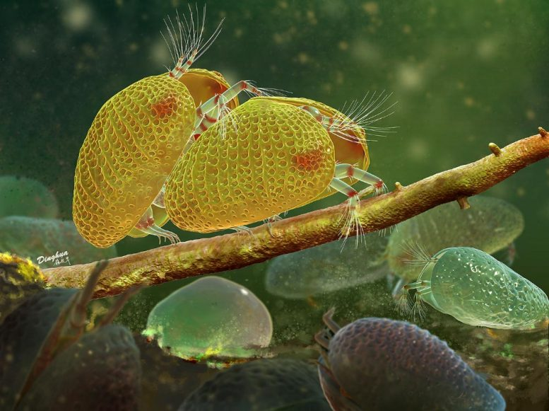 Mating Ostracods