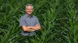 Matthew Hufford Field of Corn