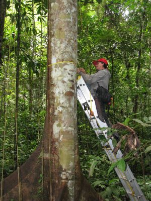 Measuring Amazon Trees