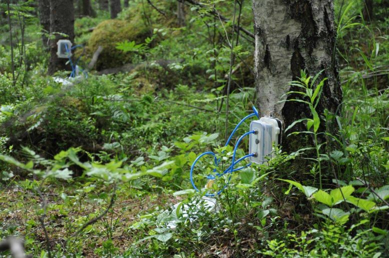 Measuring Greenhouse Gas Emissions in Trees