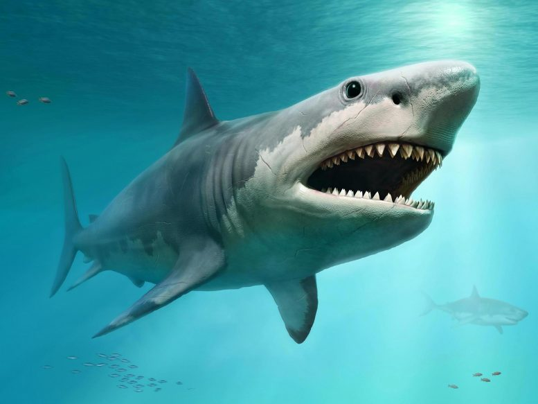 Megalodon Illustration