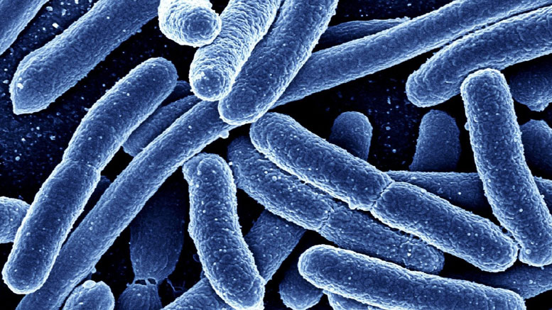 MetaCherchant Software Reveals New Cause of Antibiotic Resistance