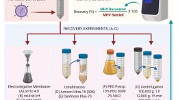 Methods Used to Recover Murine Hepatitis Virus