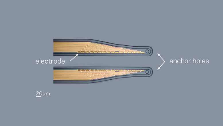 Micro Fabricated Electrode Array