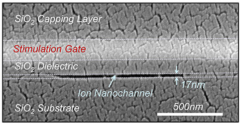 Microelectronic-Device-that-Mimics-Functions-of-Real-Cells