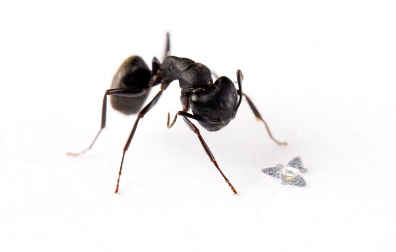 Microflier Compared to Ant