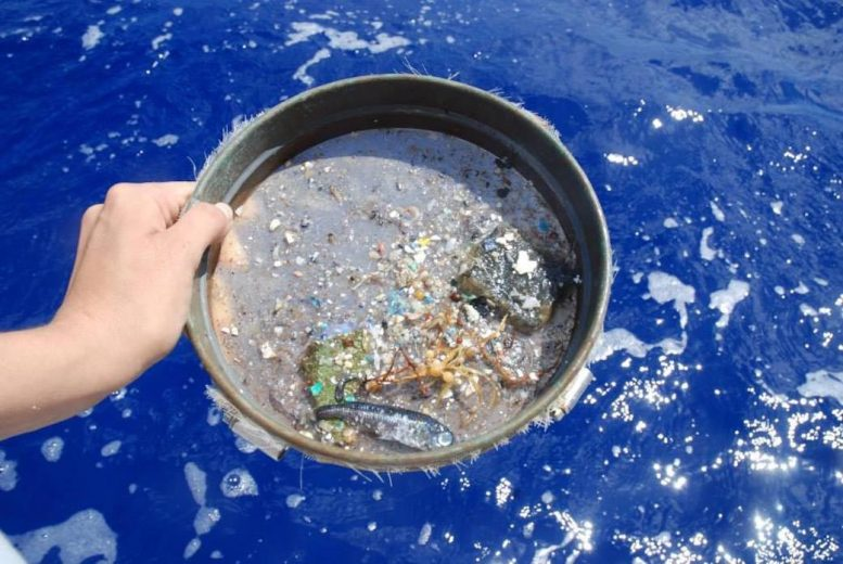 Microplastics Sifted From Ocean