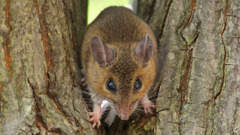 Milder Winters Have Led to Physical Alterations in Two Species of Mice