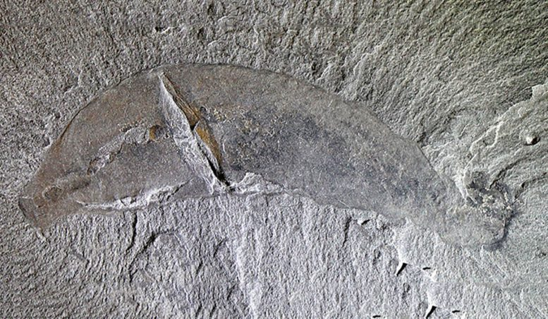 Mineralogical Signature for Burgess Shale–Type Fossilization