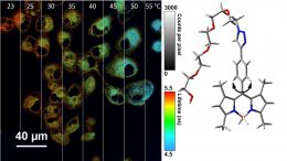 Modified Bodipy Molecules to Serve As Nano-Thermometers Inside Cells