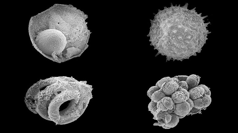 Mongolian Microfossils Shed Light on the Rise of Animals on Earth