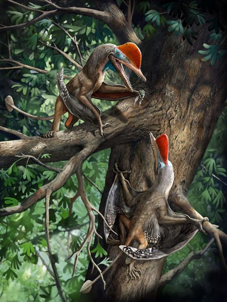 """""""Monkeydactyl"""" – Strange New Jurassic Flying Reptile Reveals the Oldest Opposable Thumbs"""