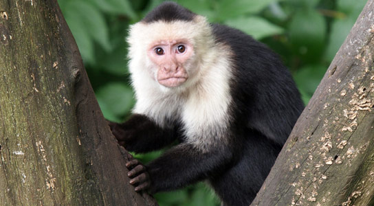 Monkeys Aren't Fooled by Expensive Brands