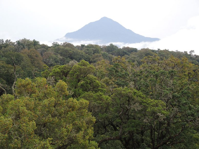 Montane Forest Cameroon