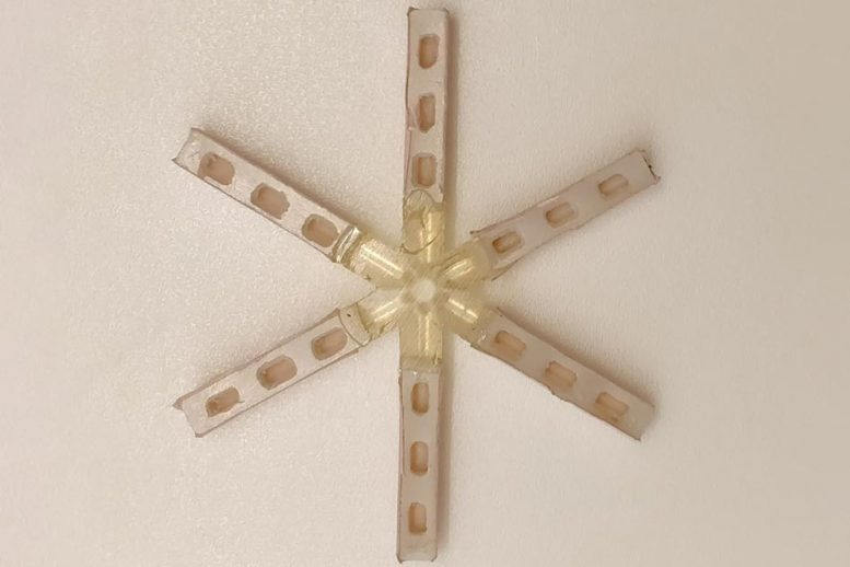 Monthly Contraceptive Capsule