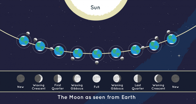Moon Phases As Seen From Earth