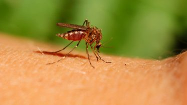 Mosquito Warning: Increased Risk of Serious Infectious Disease As the