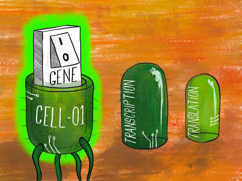 Multi-Level Regulation in an Engineered Cell