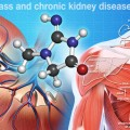 Muscle Mass is Not an Accurate a Predictor of Chronic Kidney Disease