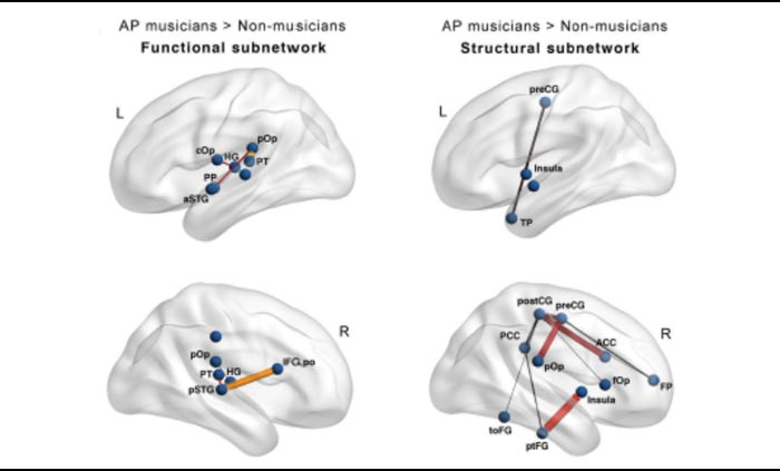 Musicians Have More Connected Brains