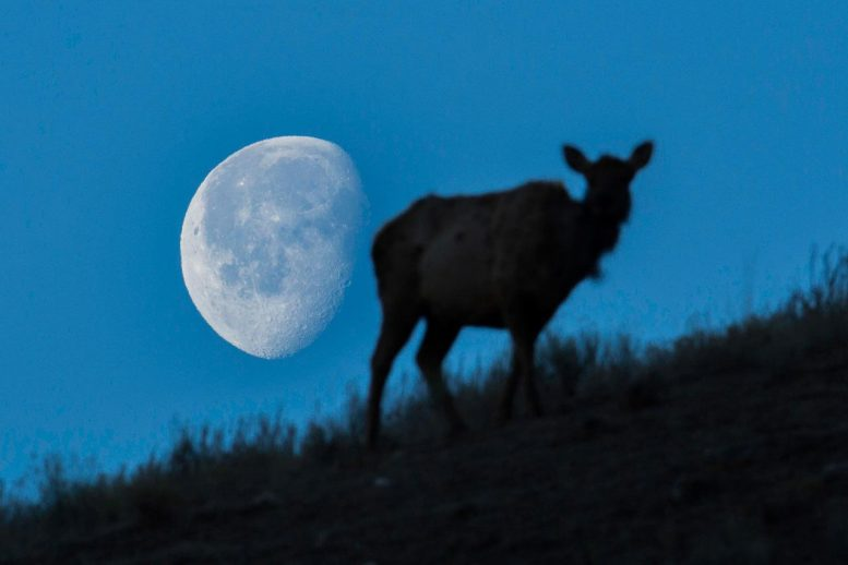 NASA Buck Moon