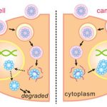 Nanocapsules Effectively Kill Cancer Cells