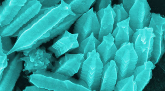 Nanostarfruits begin as gold nanowires