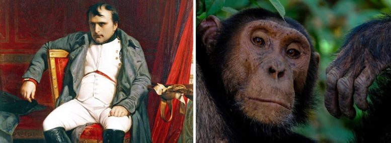 Napoleon Bonaparte / Chimpanzees