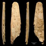Neandertals Made the First Specialized Bone Tools in Europe