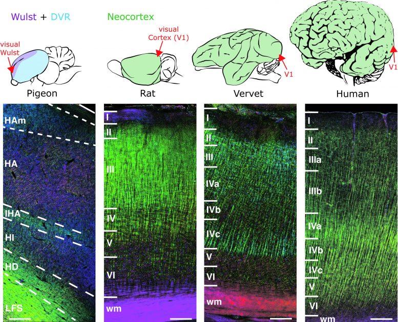 Nerve Fiber Structures