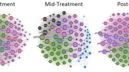 Network Topology Analysis of Immune System Function