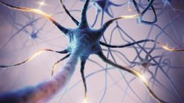 Neuron Illustration