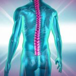 Neuroscientists Inhibit Muscle Contractions by Shining Light on Spinal Cord Neurons