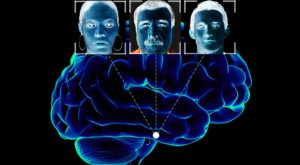 Neuroscientists Predict Which Parts of the Fusiform Gyrus are Face-Selective