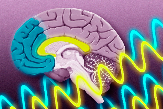 Neuroscientists Reveal How Brain Waves Guide Memory Formation