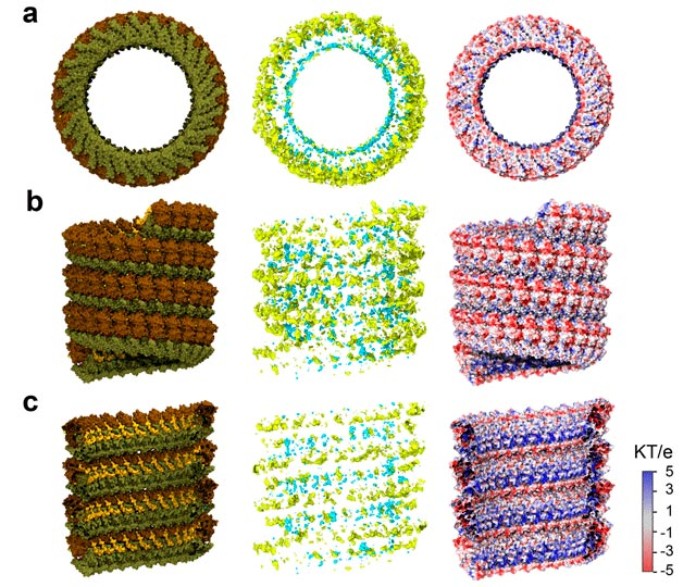 Neutralize the Highly Charged Ebola Virus Nucleocapsid